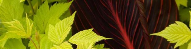 Calitatile Peisagere ale Plantelor