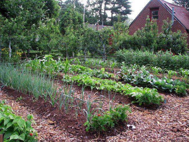 gradina de legume